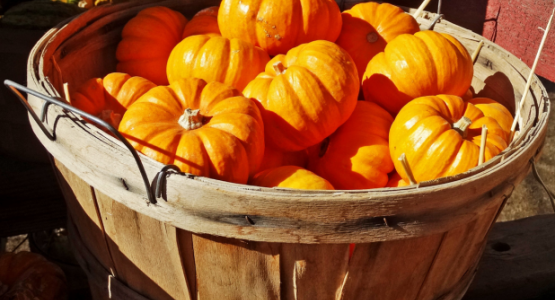 Basket of Punkins 10-14 by Don Graham from Flickr