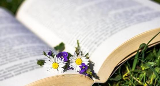 daisy book- Pixabay.com, Myriams-Fotos