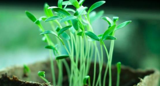 Plants - Pixabay.com, shimulnath