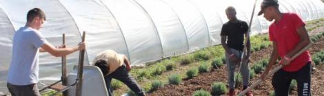 Blue Mountain Academy runs an organic farm
